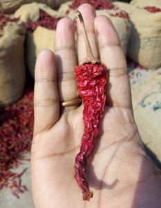 334 bydgi chilli supplier